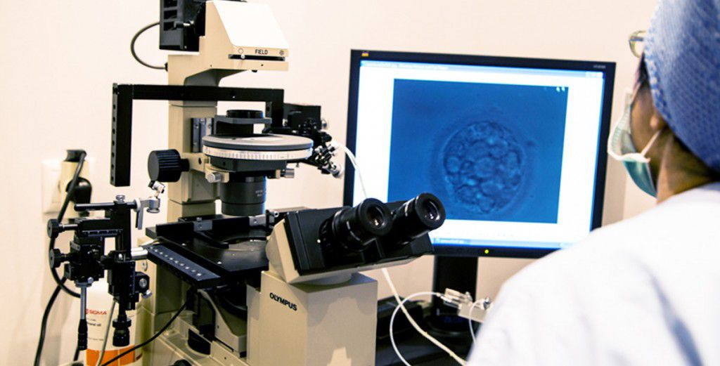 Check of fertilization and embryonic development at Mitosis IVF Center Greece